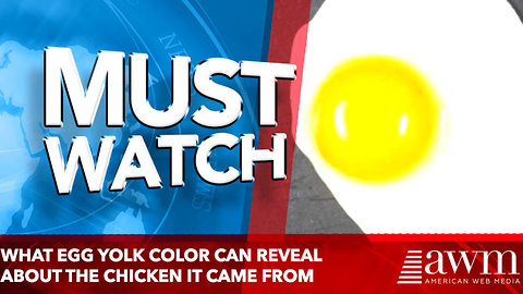 What egg yolk color can reveal about the chicken it came from