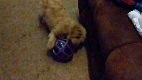 Lucy's New Treat Ball