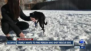 Littleton family demands justice after dog shot with pellet gun - Video