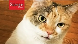 Crazy-faced cats don't win the adoption game - Video