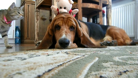 War for a piglet between a cat and a dog