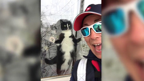 Cat Determined To Attack The Mail Carrier Fails Hilariously