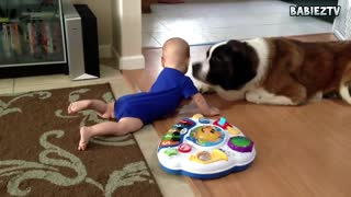 Funny Big Dogs Playing with Babies Compilation 2015 - Video
