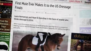 Mules Show That They Can Be a Part of The Dressage Sport