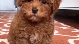 Puppy playtime  - Video