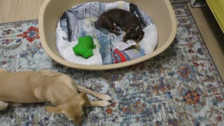 Big place for small dog  - Video