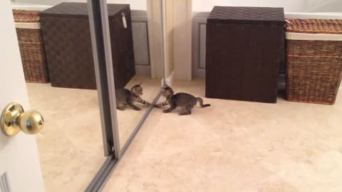 Confused Kitten Battles Its Own Reflection In The Mirror