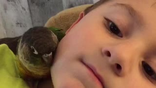 Parrot snuggles with new best friend - Video