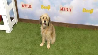 The Los Angeles Premiere Of The New Netflix Film 'Benji' - Video
