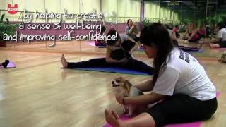 Doga: Yoga For Dogs - Video
