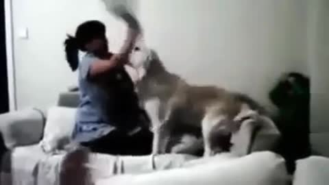 Child Saved by Dogs from Abusive Mom