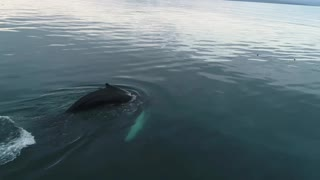 Whale is The biggest Creature living in the World