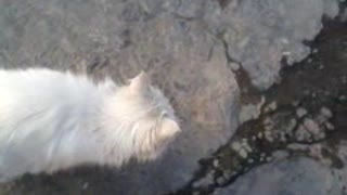 A cat which itself opens the door - Video