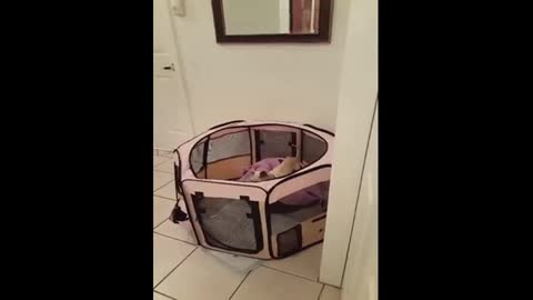 Cat helps puppy escape from its pen
