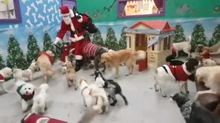 Santa Paws delivers gifts to good doggies - Video