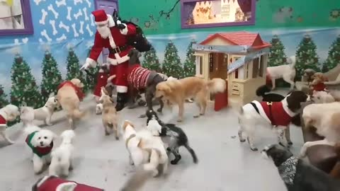 Santa Paws delivers gifts to good doggies
