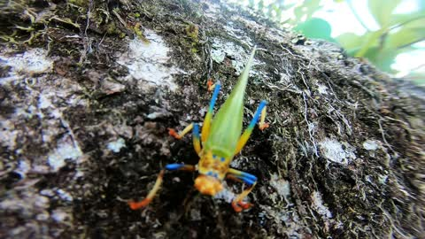 Beautiful rainbow colored insect tries to climb onto camera