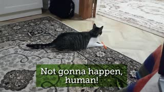 cat moments 01 - Video