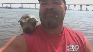 Seal jumps on guy's boat and makes a friend - Video