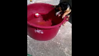 Ball in water proves challenging for determined dog - Video