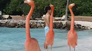 Private Beach Gives Visitors The Chance To Mingle With Flamingos - Video