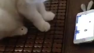 My cat loves music - Video