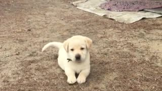 Look how fumbly bumbly he is  - Video