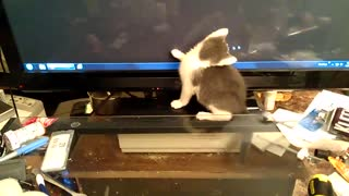 Kitten Fascinated By Mouse Cursor On Big Monitor - Video