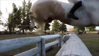 Horses Are Special Creatures, This Free Rider Proves Everything! - Video