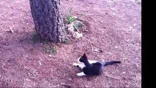 Funny Cat hahaha part 1 - Video