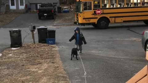 Puppy greets little boy as he gets off the bus