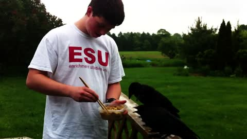 Boy feeds ravenous orphaned crows with chopsticks
