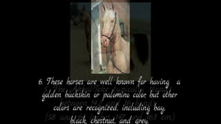 10 facts of Akhal Teke horses  - Video