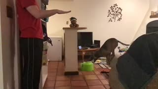 Puppy Jumps 4X Her Own Height Slow Motion