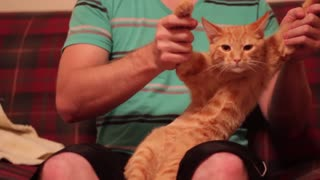 Dubstep Cat - Video
