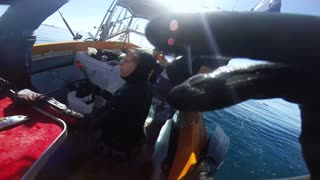 Great White Encounter - Video