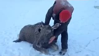 The Rescuers in Russia - Video