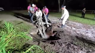 Florida firefighters rescue horse trapped in septic tank
