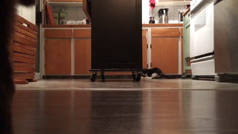 Luna chases and captures a toy
