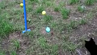 Cat plays tennis