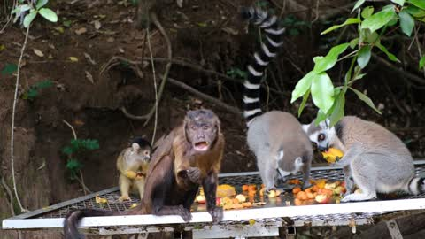 Monkeys are eating and have fun