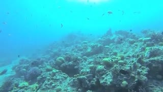 Artificial coral offers solution to endangered reefs - Video