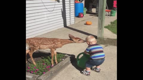Baby Boy Has Playdate With Baby Deer