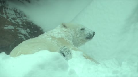 Zoo closes for snow day: Animals have an absolute blast!