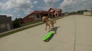 Meet Happy, the skateboarding dog! - Video