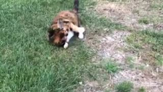 Watch how cats deal with mice