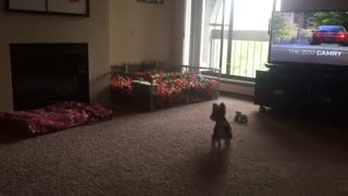 Puppy dives into homemade ball pit - Video