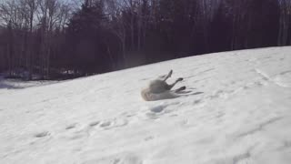 Guard dog takes a break to go sledding!