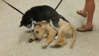 Puppies become best friends during dog training class - Video