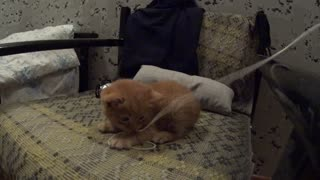 Kitten vs String - Video